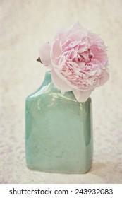 Vintage flower pale pink peony