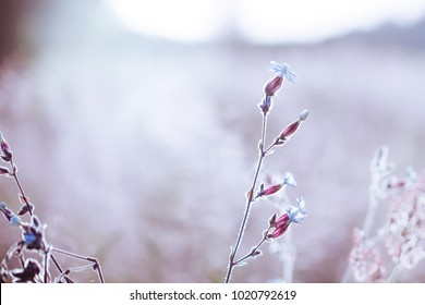 Vintage flowers in field. Outdoor nature photo with cold blue colors