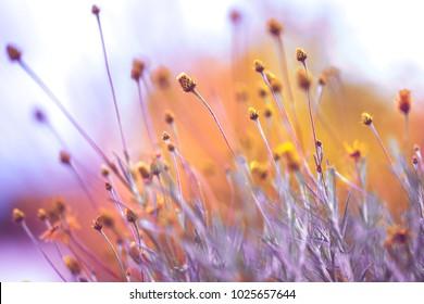 Vintage flowers nature. Unsusal bright colors
