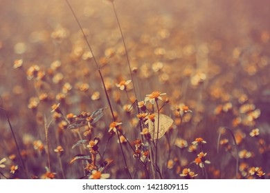 vintage flowers in soft focus and blurred for background, little flowers field  in the morning  sunshine of summer.