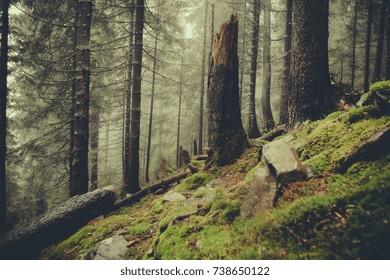 vintage foggy  forest background