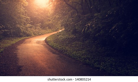 Vintage forest road in sunset
