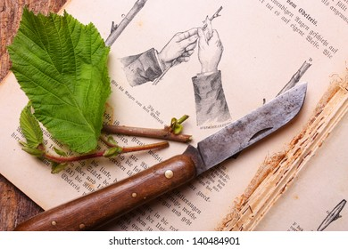 Vintage gardening scene with old book, plant and gardening tools