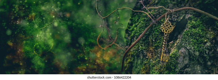 vintage gold key in forest tree. magical composition with beautiful fairy key in nature, concept secret garden, grunge mystery background. banner for website. copy space