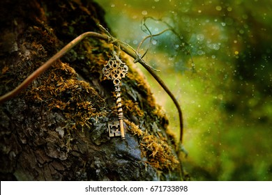 vintage gold key in forest tree. magical composition with beautiful key in nature, concept secret garden, mystery background