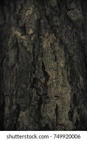 Vintage grunge wood bark texture background
