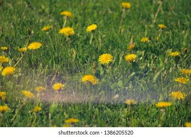 Vintage image of dandellion field shot with natural light leak