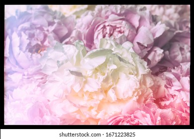Vintage image of peony bouquet.
