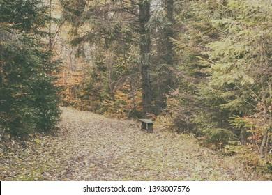 Vintage image, tourist route in autumn forest, nature landscape, outdoor travel background, National park Slovak paradise (Narodny park Slovensky Raj), Slovakia (Slovensko) - Shutterstock ID 1393007576