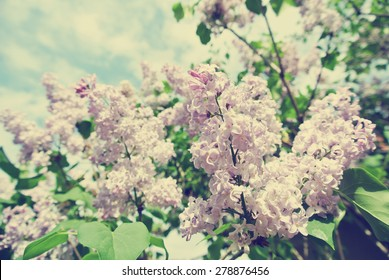 Vintage image of violet lilac flowers on the tree on a sunny spring day. Photo filtered in faded, washed out, retro style. Nostalgic vintage concept.