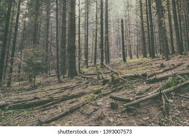 Vintage image of wild mountain pine forest, outdoor travel background, National park Slovak paradise (Narodny park Slovensky Raj), Slovakia (Slovensko) - Shutterstock ID 1393007573