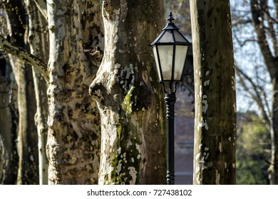 Vintage lamp among sycamore trees in the park in Zagreb, Croatia