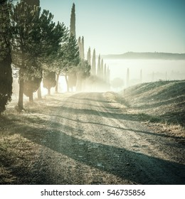 Vintage landscape with cypress and road in foggy valley, Tuscany, lomography style