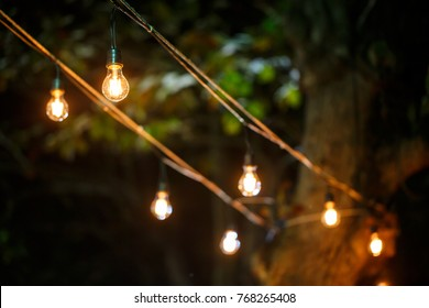 vintage light bulbs hanging from  tree