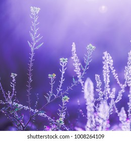 vintage lilac nature background of dry wild meadow plants