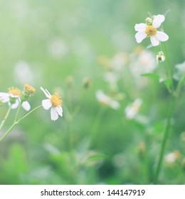 vintage little flowers in spring