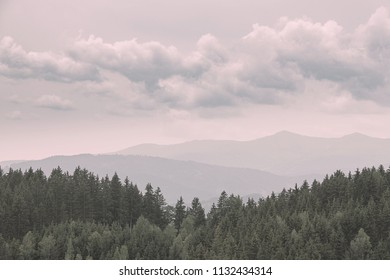 Vintage look of firs, pines, larches forest with fog and low clouds. Nostalgic look. Coniferous woods. Styrian mountains, Austria