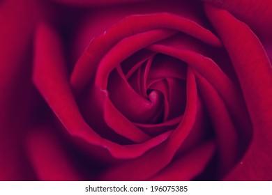 Vintage macro photo of red rose