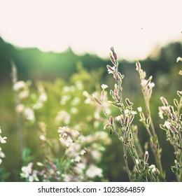 Vintage meadow flowers. Nature