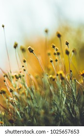 Vintage meadow wild plants in field. Nature view