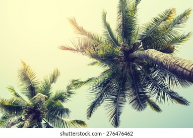 Vintage nature background of coconut palm tree on tropical beach blue sky with sunlight of morning in summer,  instagram filter