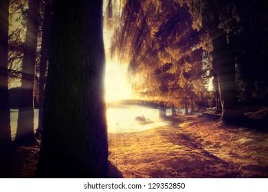vintage nature landscape- old forest background in sunrise