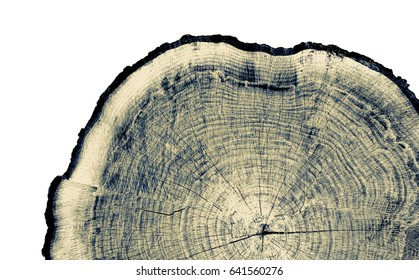 Vintage neutral monotone piece of round wood from a large tree. Rough textured surface with rings, cracks and wave pattern. Flat rustic wooden background.