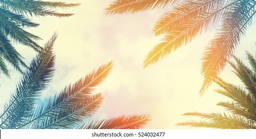 Vintage palm background texture frame
