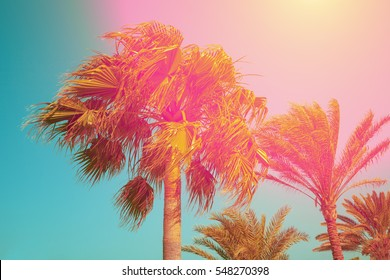 Vintage palm trees against sky at sunset