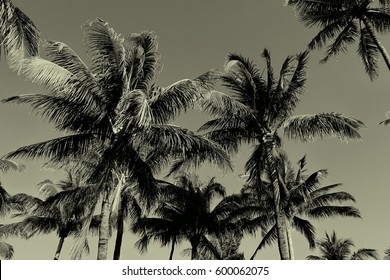 Vintage Palm Trees Background Pattern