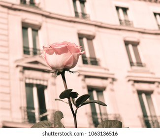Vintage Parisian street and rose