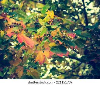 vintage photo of autumn leaves. filtered look