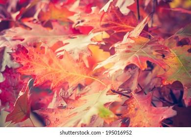 vintage photo of autumnal leaves