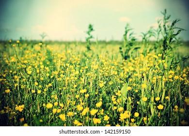 Vintage photo of beautiful meadow