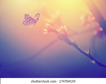 Vintage photo of butterfly and pink tree flower