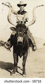 Vintage photo, circa 1900, of a cowboy riding a longhorn steer