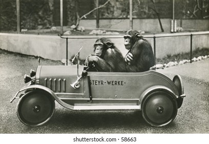 Vintage photo, circa 1900 of two chimps in a midget car