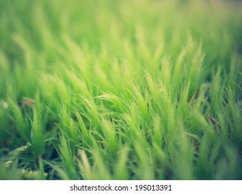 vintage photo of close up green moss