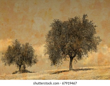 Vintage photo of a couple of olive trees in a field in summertime