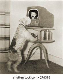 Vintage Photo of a Dog Watching the Television