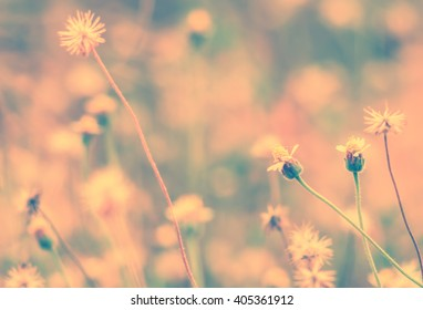 Vintage photo of grass flowers on nature background.Vintage style photo with custom white balance,Image made with vintage effect style pictures.
