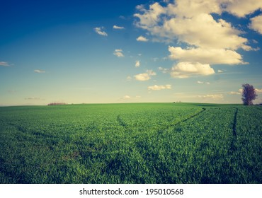 vintage photo of green field with tree landscape