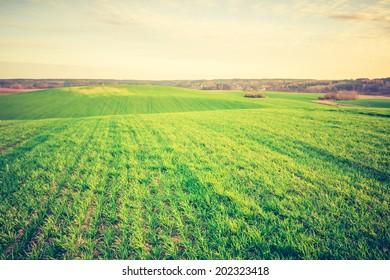 vintage photo of green fields in summer
