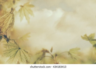 Vintage photo with green leaves and sky, environment concept