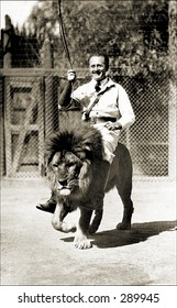 Vintage photo of a Lion Tamer Rides Lion In Show