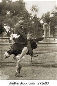 Vintage photo of a Man Riding Ostrich