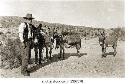 Vintage photo of a Prospector And Mules