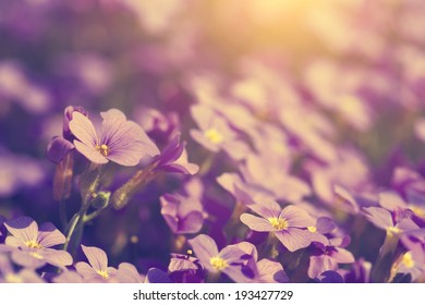 Vintage photo of purple flowers in sunset