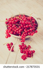 vintage photo of  Red Currant Berries