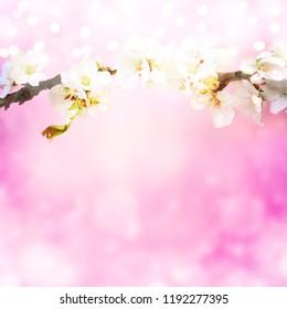 Vintage photo of sakura tree. flower in spring